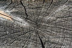 Szarość piłowali drewnianej beli końcówki naturalnego tło Obrazy Stock