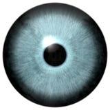 Szarości oka zwierzęcia zieleń colorized tekstura ilustracja wektor