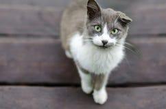 Szarobiały kot z jeden zadzierał uszatych spojrzenia przy ramą zdjęcia royalty free