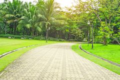 Szary betonowego bloku bruku przejście obok pięknego świeżego zielonego dywanowej trawy jarda, gładkiego gazonu i wiecznozieloneg obrazy stock