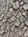 Szary drewno barkentyny szczegół Zdjęcia Stock
