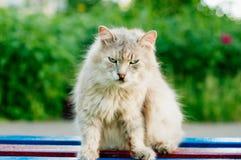 Szary gniewny kot na ławce fotografia stock