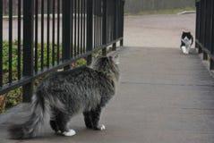 Szary kot i czarny biały kota spotkanie na moscie Zdjęcie Stock