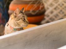 Szary kot jest Siedzący i Półsenny obrazy royalty free