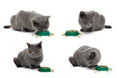 Szary kot siedzi obok pucharu jedzenie na białym tle Zdjęcia Royalty Free