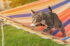 Szary kot w kolorowym hamaku w ogródzie sunlight obraz stock