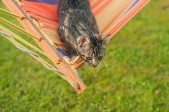 Szary kot w kolorowym hamaku w ogródzie sunlight obraz royalty free