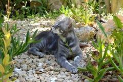 Szary kot z złotymi oczami fotografia royalty free