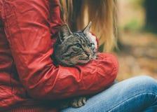 Szary kota bezdomny i kobiety ściskać Plenerowy fotografia stock