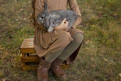 Szary królik śpi w rękach dziewczyny obsiadanie na trawie obrazy royalty free