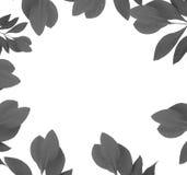 Szary liść wokoło białego tła Fotografia Stock