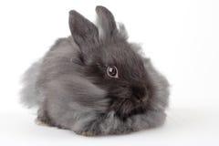 szary odosobnione króliczka Obraz Stock