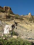 Szary osioł z ładunkiem na jego z powrotem w górach Obraz Royalty Free