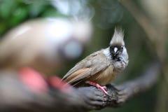 Szary ptak obraz stock