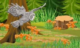 Szary sowy tawny w jesień lasowych bagażnikach mgła i drzewa, las pieczarek chanterelles, kamienie royalty ilustracja