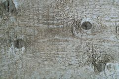 Szary tło naturalny drewno, pojęcie naturalne tekstury, kopii przestrzeń Zdjęcie Stock