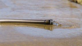 Szary węża elastycznego bieg na betonie Fotografia Royalty Free