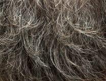 szary włosy Obraz Royalty Free