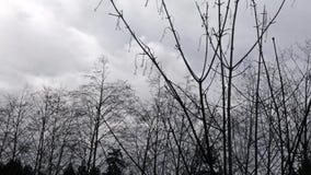 Szarzy i biali stormclouds nad zbiory wideo