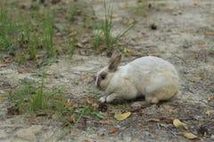 Szarzy królików wykopaliska Zdjęcie Royalty Free