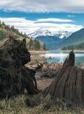 Szczątki drzewa które z przykrością cięli tworzyć Piekarnianego jezioro Fotografia Royalty Free
