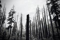 Szczątki Dziki ogień Obraz Stock