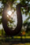 Szczęście w słońcu Fotografia Stock