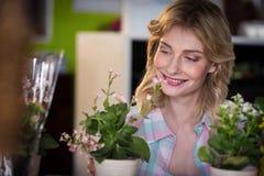 Szczęśliwa żeńska kwiaciarnia patrzeje kwiatu garnek Zdjęcia Royalty Free
