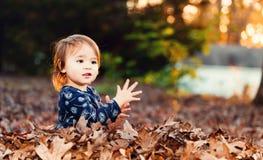 Szczęśliwa berbeć dziewczyna bawić się w stosie spadek opuszcza przy zmierzchem Fotografia Stock
