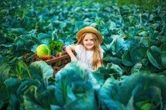 Szczęśliwa dziewczyna w słomianym kapeluszu na kapusty polu z koszem warzywa fotografia royalty free