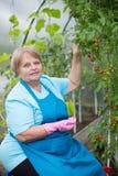 Szczęśliwa emeryt kobieta jest ubranym fartucha i rękawiczki w szklarni obraz royalty free