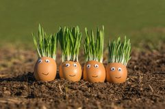 Szczęśliwa jajeczna rodzina Zdjęcie Stock