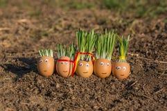 Szczęśliwa jajeczna rodzina Obraz Stock