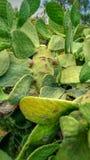 Szczęśliwa kaktusowa twarz Zdjęcia Royalty Free