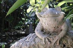 Szczęśliwa kamienna żaba ono uśmiecha się w cieniach zdjęcie stock
