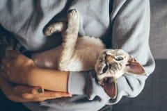 Szczęśliwa młoda kobieta z jej kotem Domów zwierzęta domowe Obrazy Stock