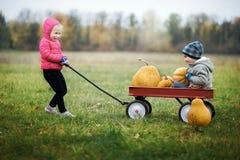 Szczęśliwa mała dziewczynka na dyniowej łacie na zimnym jesień dniu z mnóstwo baniami dla Halloween lub dziękczynienia, obrazy stock