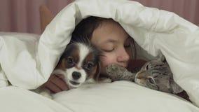 Szczęśliwa nastoletnia dziewczyna komunikuje z psim Papillon i Tajlandzkim kotem w łóżko zapasu materiału filmowego wideo zbiory