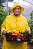 Szczęśliwa ogrodniczka z uprawami Obrazy Royalty Free