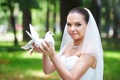 Szczęśliwa panna młoda z ślubnym gołębiem Zdjęcie Royalty Free