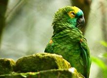 Szczęśliwa papuga i swój jaskrawi kolory zdjęcie stock