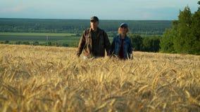 Szczęśliwa para, w średnim wieku mężczyzna, kobieta, i podczas gdy chodzący na pszenicznym polu przy zmierzchu lata wieczór zdjęcie wideo