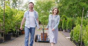 Szczęśliwa para z drzewem w garnku zbiory