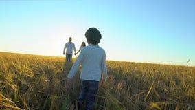 Szczęśliwa rodzina outdoors chodzi wpólnie na pszenicznym polu z chłopiec syna dzieciaka dziecka bieg rodzice matkuje, ojcuje, zbiory