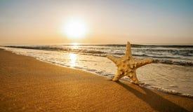 Szczęśliwa rozgwiazda cieszy się słońce przy tropikalną plażą obrazy royalty free