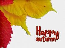 Szczęśliwa spadek gratulacje karta z koloru żółtego i czerwieni liśćmi Obrazy Stock