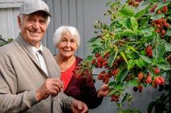 Szczęśliwa starsza para w ogródzie Zdjęcie Stock