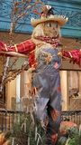 Szczęśliwa strach wrona przy Halloween Obraz Royalty Free