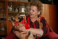 Szczęśliwa, uśmiechnięta babcia z Bożenarodzeniowym prezentem, chihuahua szczeniak z czerwonym faborkiem zdjęcie stock