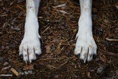 szczęśliwe psie łapy w lesie Fotografia Royalty Free
